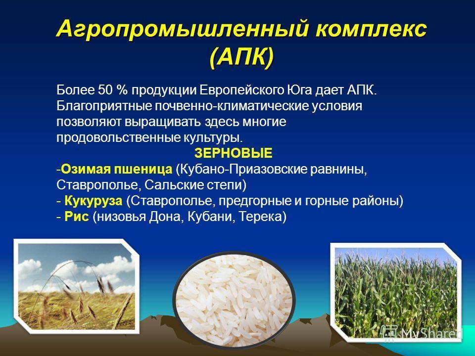 Агропромышленный комплекс (АПК) Более 50 % продукции Европейского Юга дает АПК. Благоприятные почвенно-климатические условия позволяют выращивать здесь многие продовольственные культуры. ЗЕРНОВЫЕ -Озимая пшеница (Кубано-Приазовские равнины, Ставропол