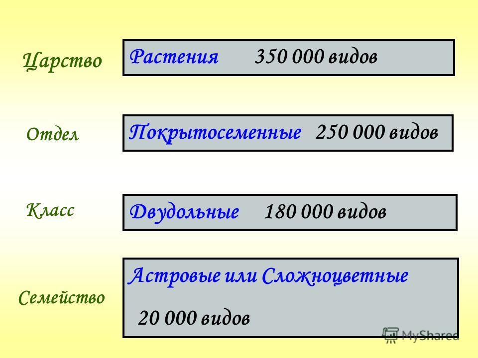 Царство Отдел Класс Семейство Растения 350 000 видов Покрытосеменные 250 000 видов Двудольные 180 000 видов Астровые или Сложноцветные 20 000 видов