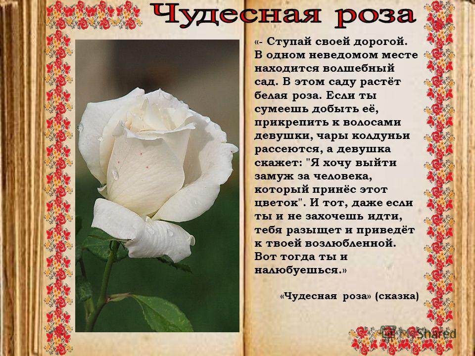 «- Ступай своей дорогой. В одном неведомом месте находится волшебный сад. В этом саду растёт белая роза. Если ты сумеешь добыть её, прикрепить к волосами девушки, чары колдуньи рассеются, а девушка скажет: