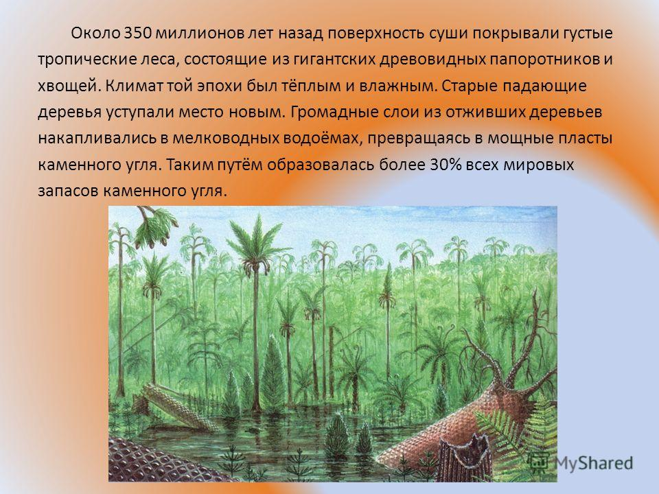Около 350 миллионов лет назад поверхность суши покрывали густые тропические леса, состоящие из гигантских древовидных папоротников и хвощей. Климат той эпохи был тёплым и влажным. Старые падающие деревья уступали место новым. Громадные слои из отживш
