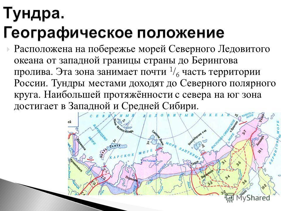 Расположена на побережье морей Северного Ледовитого океана от западной границы страны до Берингова пролива. Эта зона занимает почти 1 / 6 часть территории России. Тундры местами доходят до Северного полярного круга. Наибольшей протяжённости с севера