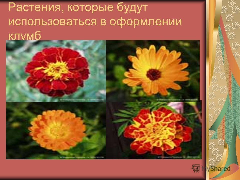 Растения, которые будут использоваться в оформлении клумб