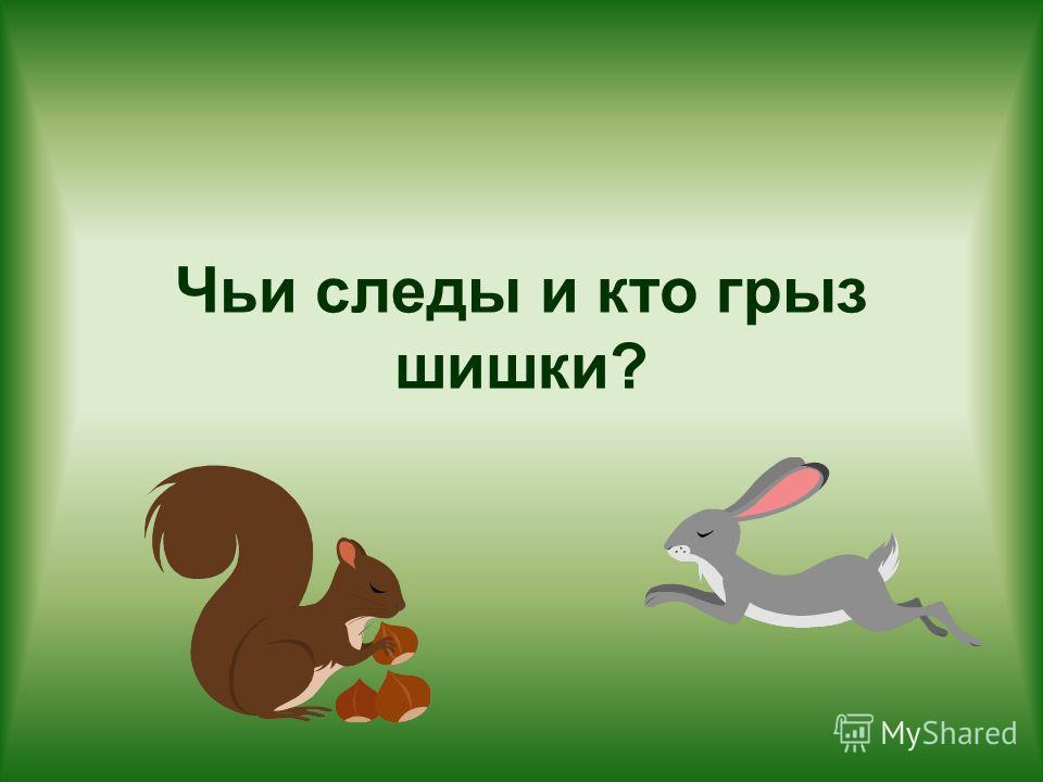 Чьи следы и кто грыз шишки?