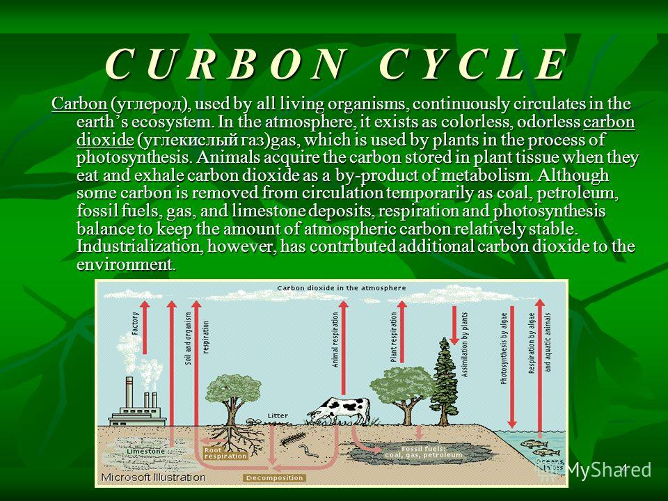 4 C U R B O N C Y C L E Carbon (углерод), used by all living organisms, continuously circulates in the earths ecosystem. In the atmosphere, it exists as colorless, odorless carbon dioxide (углекислый газ)gas, which is used by plants in the process of