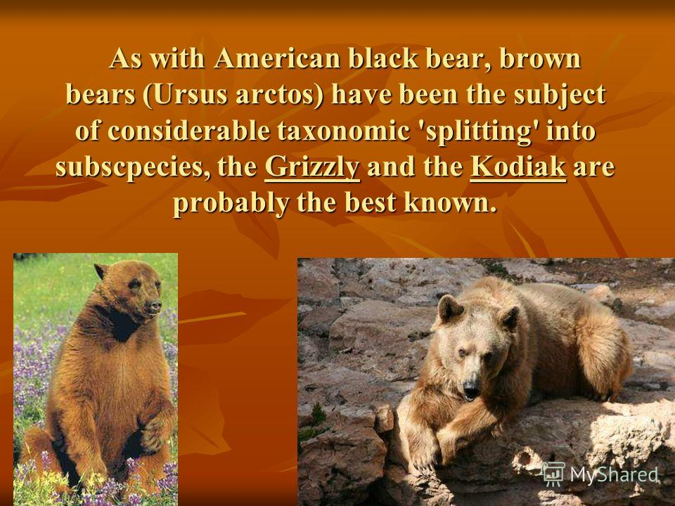 As with American black bear, brown bears (Ursus arctos) have been the subject of considerable taxonomic 'splitting' into subscpecies, the Grizzly and the Kodiak are probably the best known. As with American black bear, brown bears (Ursus arctos) have