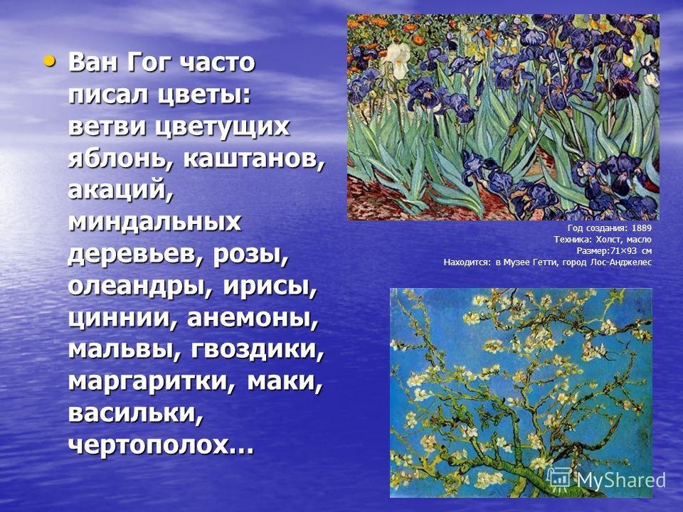 Ван Гог часто писал цветы: ветви цветущих яблонь, каштанов, акаций, миндальных деревьев, розы, олеандры, ирисы, циннии, анемоны, мальвы, гвоздики, маргаритки, маки, васильки, чертополох… Ван Гог часто писал цветы: ветви цветущих яблонь, каштанов, ака
