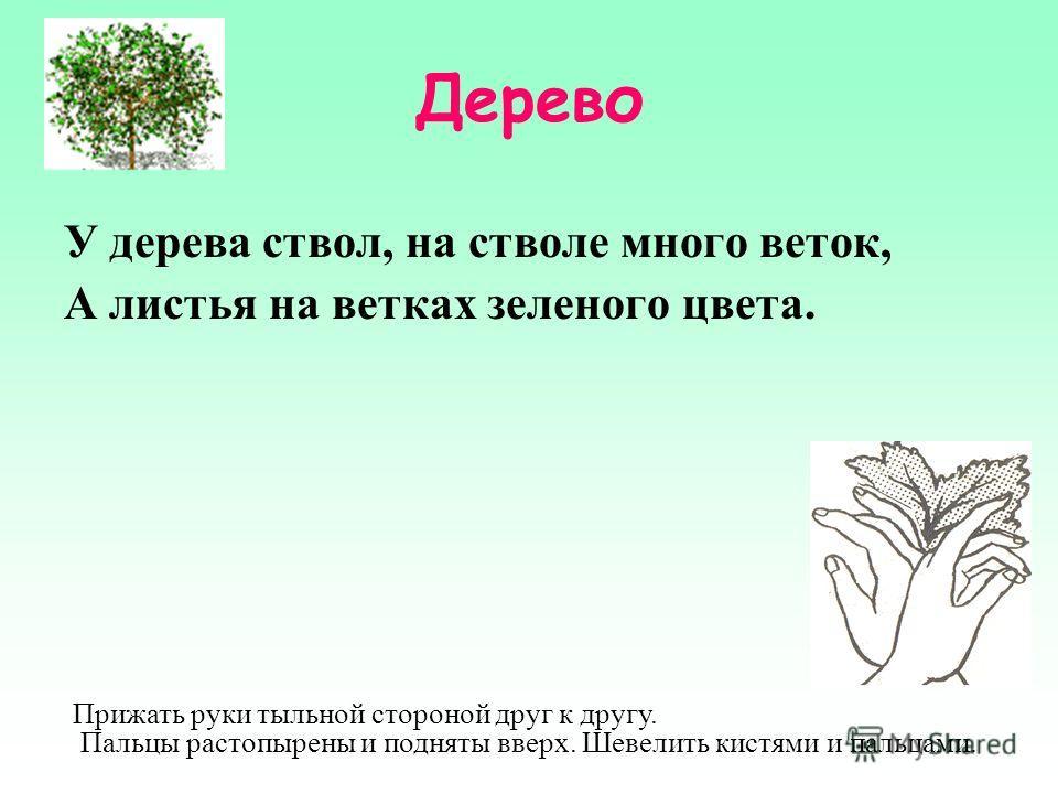 Дерево У дерева ствол, на стволе много веток, А листья на ветках зеленого цвета. Прижать руки тыльной стороной друг к другу. Пальцы растопырены и подняты вверх. Шевелить кистями и пальцами.