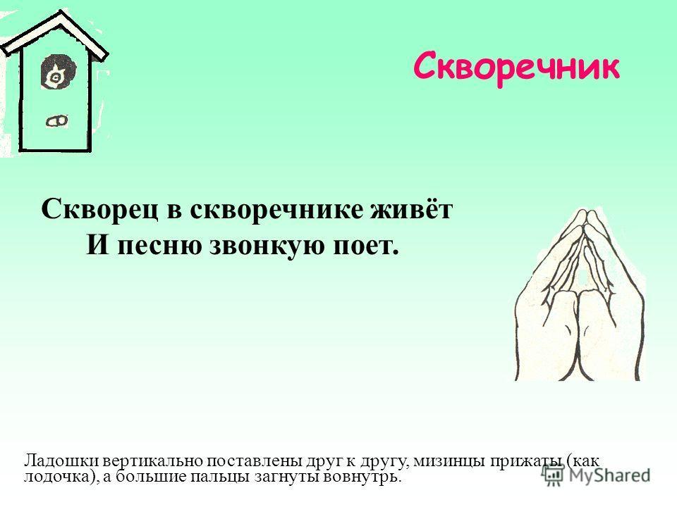 Скворечник Скворец в скворечнике живёт И песню звонкую поет. Ладошки вертикально поставлены друг к другу, мизинцы прижаты (как лодочка), а большие пальцы загнуты вовнутрь.