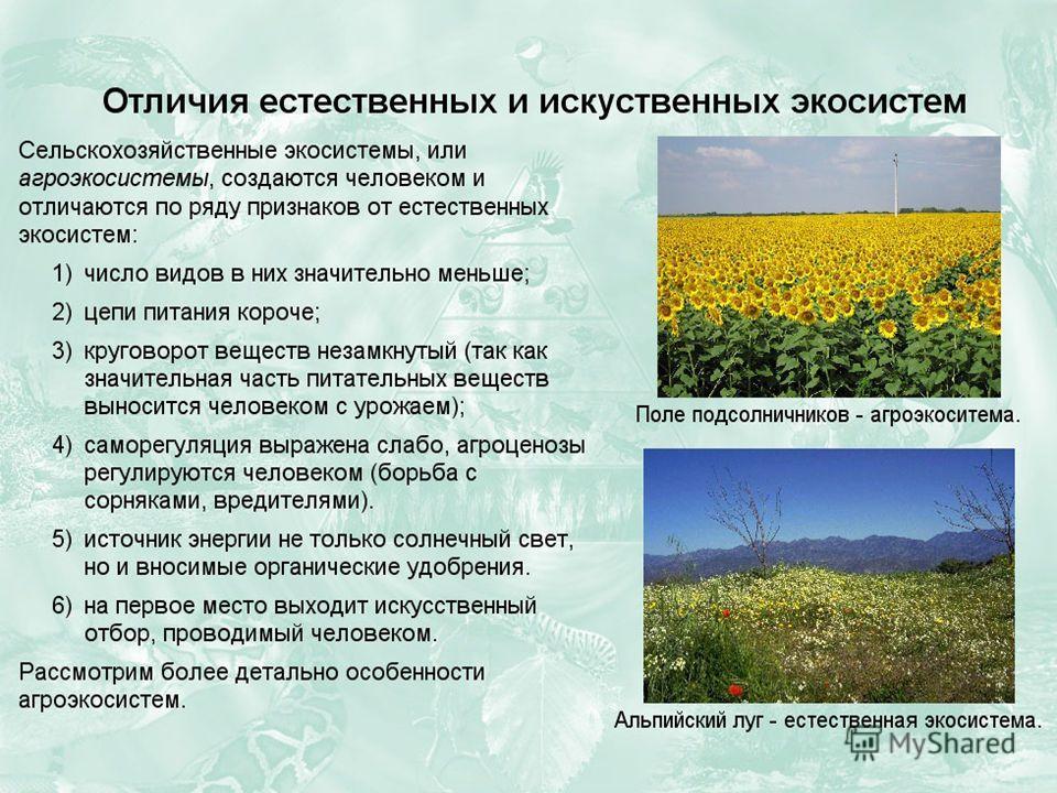 Чем отличаются агроэкосистемы от естественных экосистем