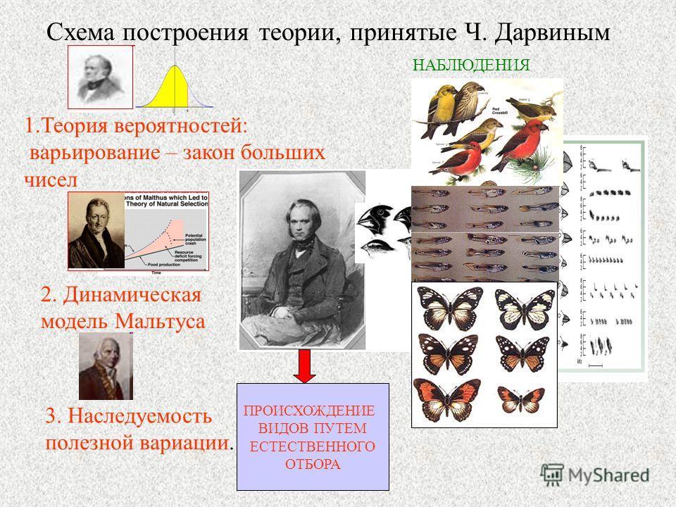 Схема построения теории, принятые Ч. Дарвиным 1.Теория вероятностей: варьирование – закон больших чисел 2. Динамическая модель Мальтуса 3. Наследуемость полезной вариации. ПРОИСХОЖДЕНИЕ ВИДОВ ПУТЕМ ЕСТЕСТВЕННОГО ОТБОРА НАБЛЮДЕНИЯ