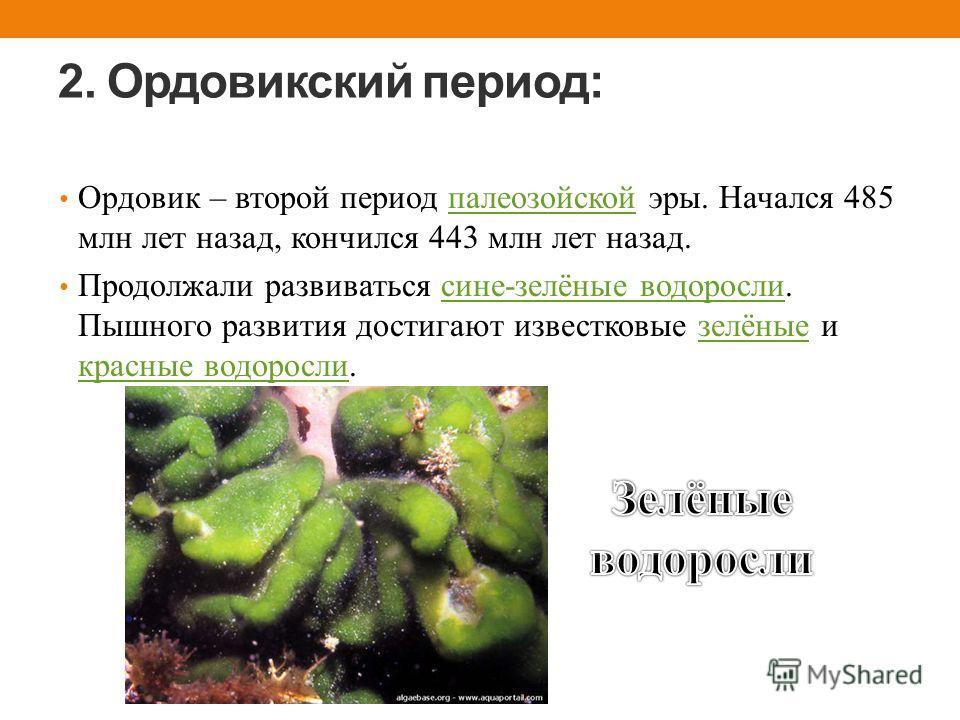 2. Ордовикский период: Ордовик – второй период палеозойской эры. Начался 485 млн лет назад, кончился 443 млн лет назад.палеозойской Продолжали развиваться сине-зелёные водоросли. Пышного развития достигают известковые зелёные и красные водоросли.сине