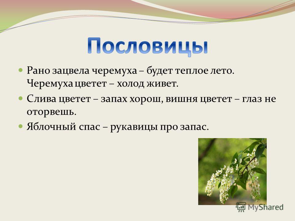 Рано зацвела черемуха – будет теплое лето. Черемуха цветет – холод живет. Слива цветет – запах хорош, вишня цветет – глаз не оторвешь. Яблочный спас – рукавицы про запас.