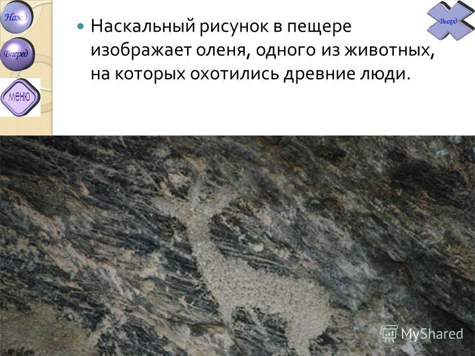 Наскальный рисунок в пещере изображает оленя, одного из животных, на которых охотились древние люди.
