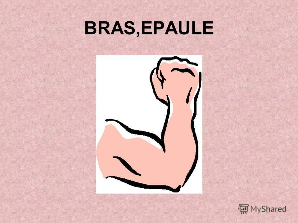 BRAS,EPAULE