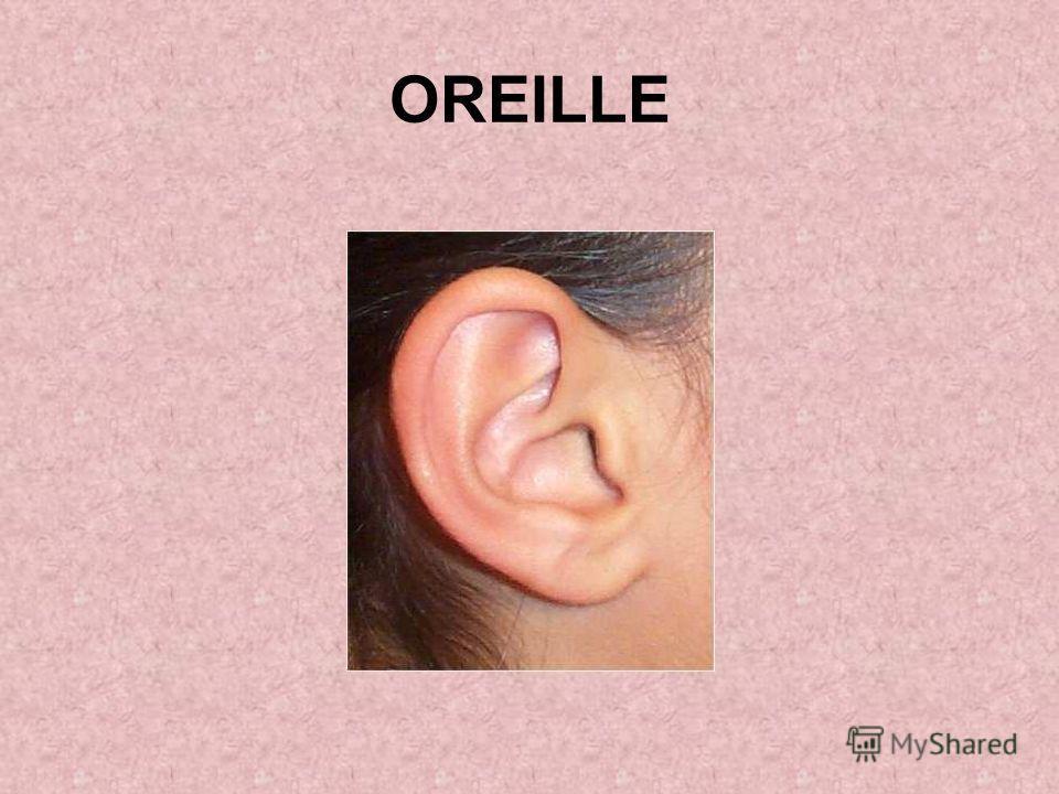 OREILLE