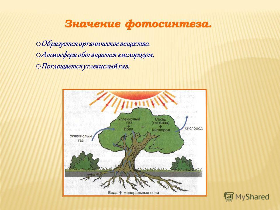 o Образуется органическое вещество. o Атмосфера обогащается кислородом. o Поглощается углекислый газ.