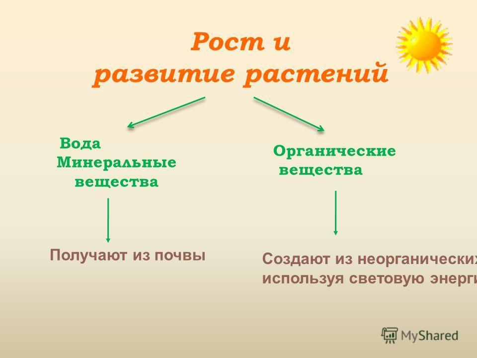 Рост и развитие растений Вода Минеральные вещества Получают из почвы Органические вещества Создают из неорганических, используя световую энергию