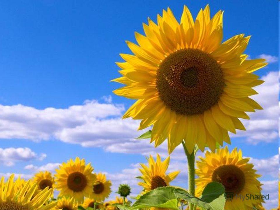 Выборочный диктант Задание: из предложенного текста выбрать и записать только имена прилагательные. Дивный цветок. Из далекой Америки вывезли прелестный цветок золотистой окраски. Редкое чудо было очень высокого роста. Заморского красавца сажали в це