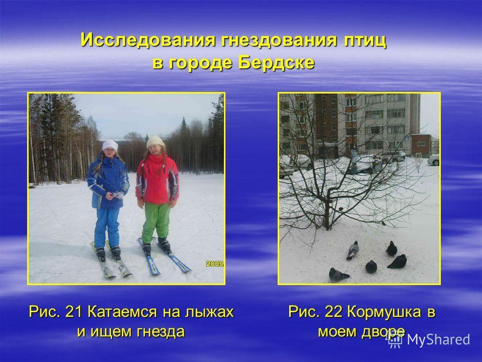 Рис. 21 Катаемся на лыжах и ищем гнезда Исследования гнездования птиц в городе Бердске Рис. 22 Кормушка в моем дворе