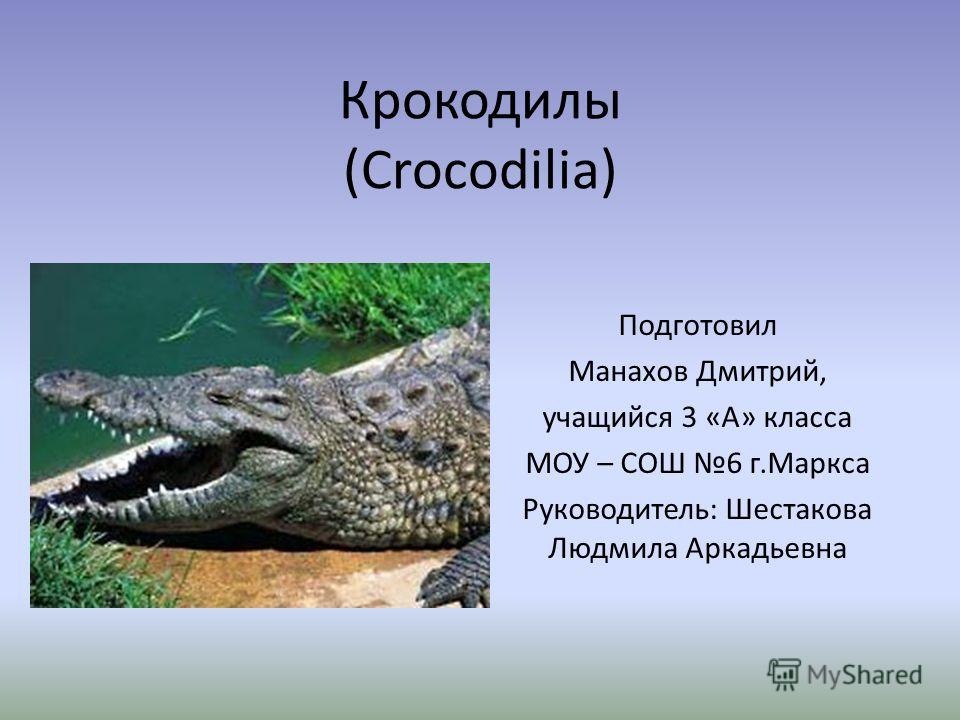 Крокодилы (Crocodilia) Подготовил Манахов Дмитрий, учащийся 3 «А» класса МОУ – СОШ 6 г.Маркса Руководитель: Шестакова Людмила Аркадьевна