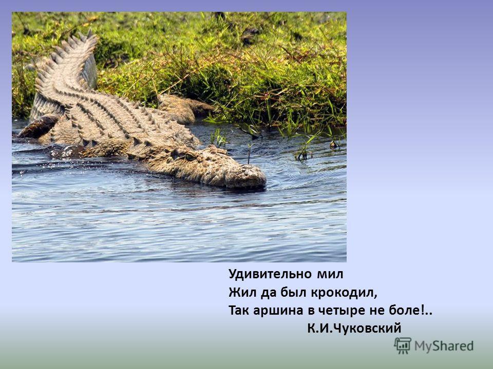 Удивительно мил Жил да был крокодил, Так аршина в четыре не боле!.. К.И.Чуковский