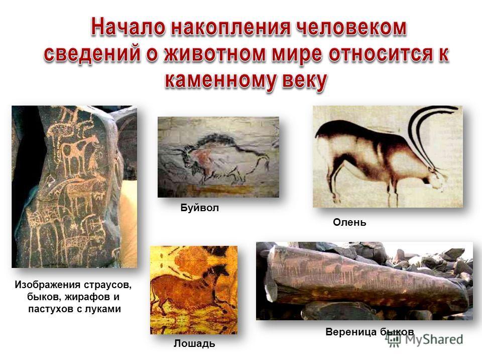 Изображения страусов, быков, жирафов и пастухов с луками Вереница быков Лошадь Олень Буйвол