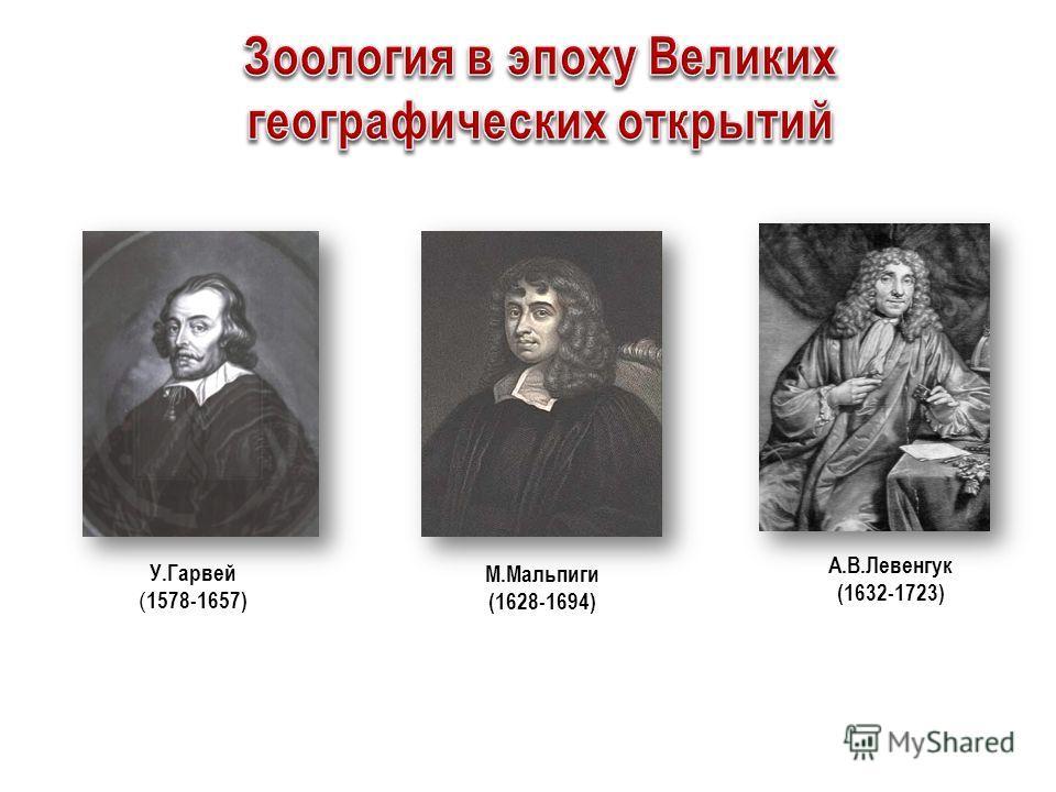 А.В.Левенгук (1632-1723) М.Мальпиги (1628-1694) У.Гарвей ( 1578-1657)