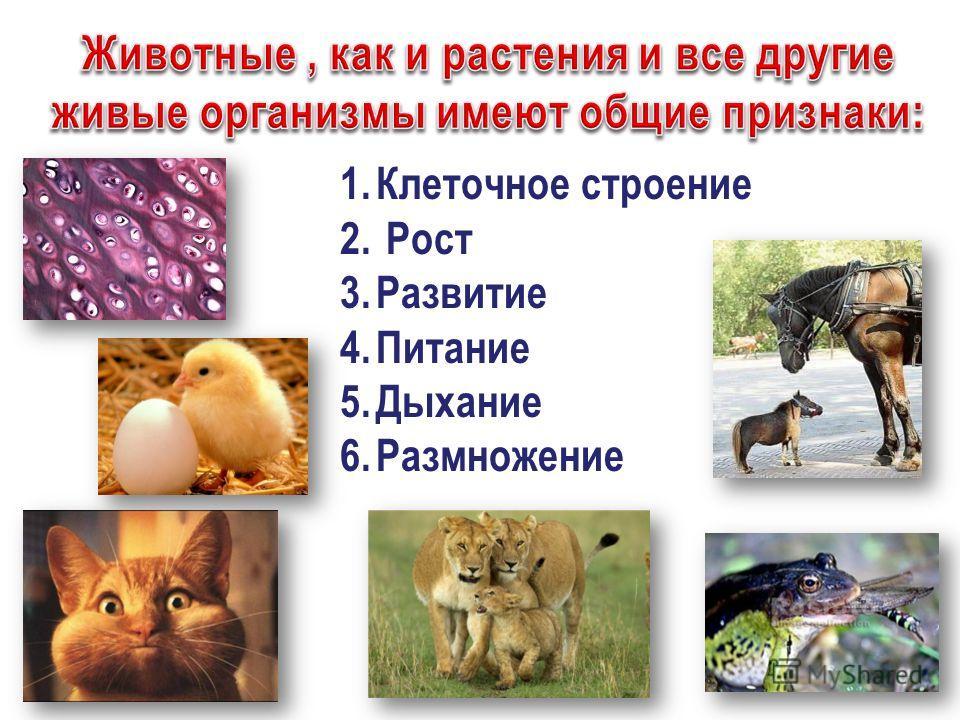 1.Клеточное строение 2. Рост 3.Развитие 4.Питание 5.Дыхание 6.Размножение