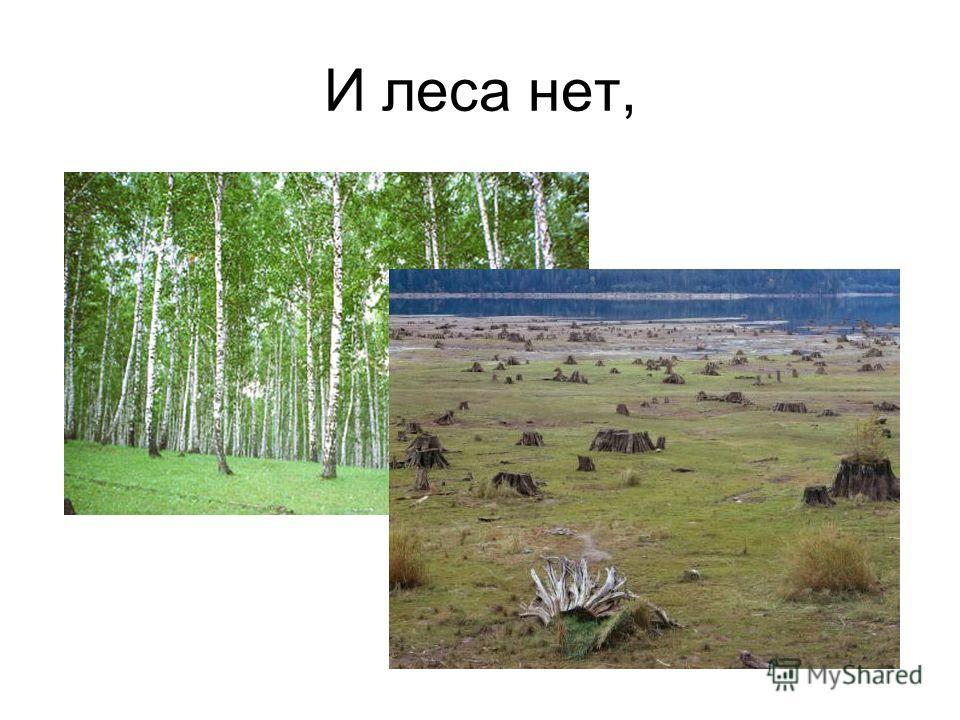 И леса нет,