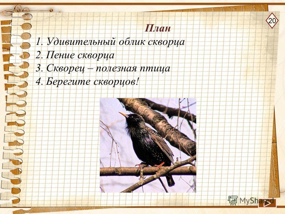 План 1.Удивительный облик скворца 2.Пение скворца 3.Скворец – полезная птица 4.Берегите скворцов! 20