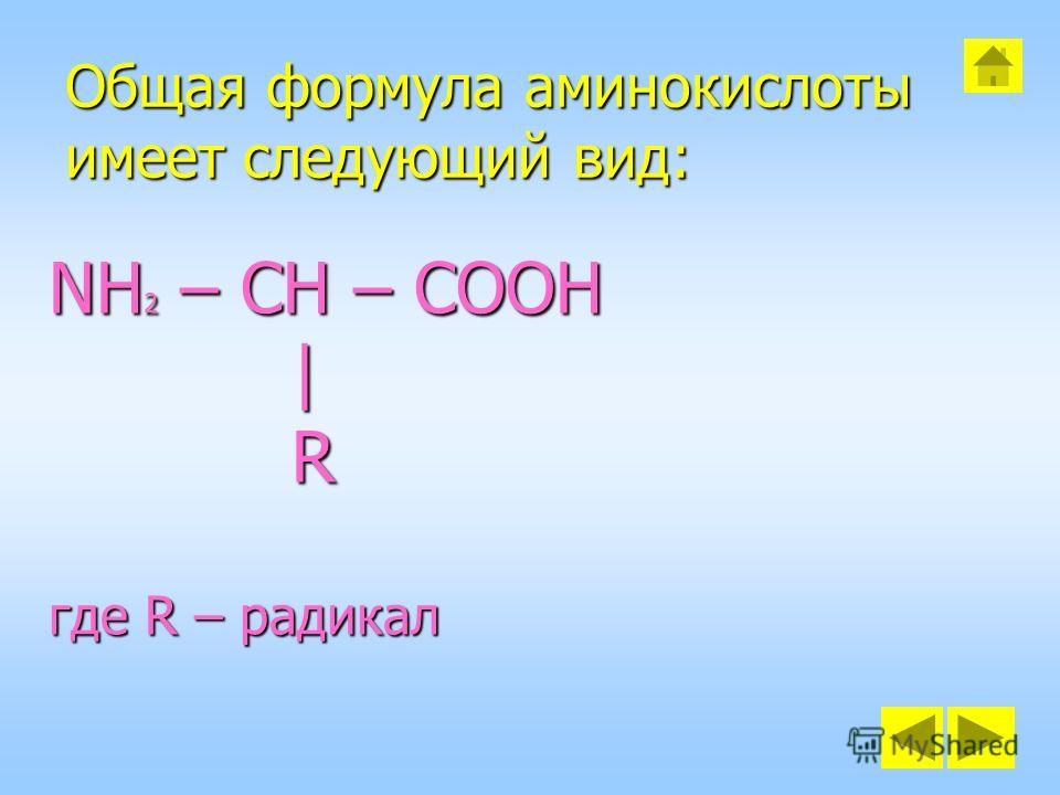 Общая формула аминокислоты имеет следующий вид: NH 2 – CH – COOH | R где R – радикал