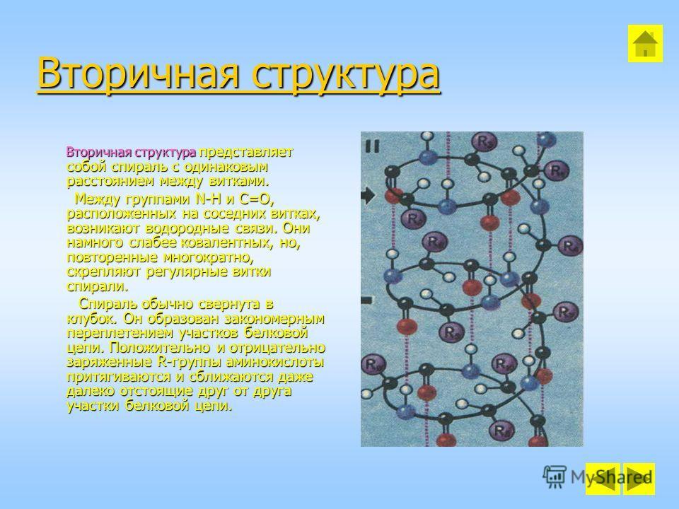 Вторичная структура Вторичная структура Вторичная структура представляет собой спираль с одинаковым расстоянием между витками. Вторичная структура представляет собой спираль с одинаковым расстоянием между витками. Между группами N-H и C=O, расположен