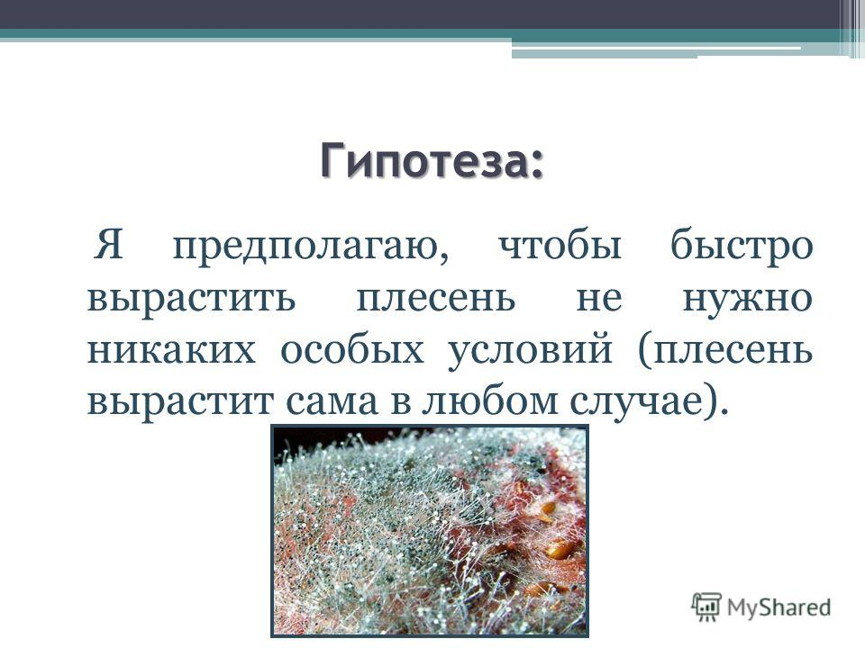 Гипотеза: Я предполагаю, чтобы быстро вырастить плесень не нужно никаких особых условий (плесень вырастит сама в любом случае).