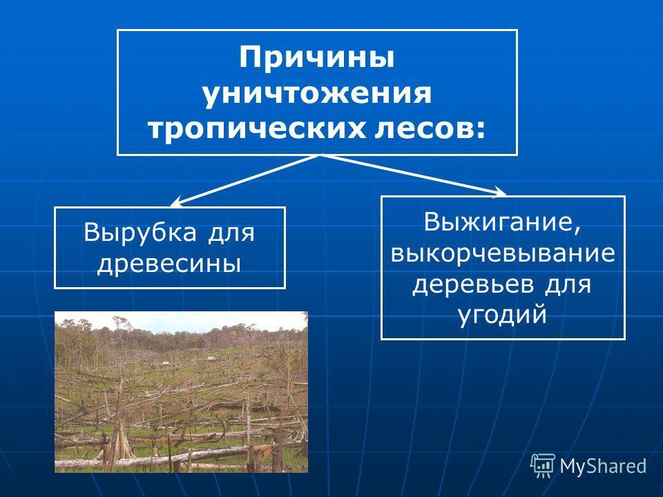 Причины уничтожения тропических лесов: Вырубка для древесины Выжигание, выкорчевывание деревьев для угодий