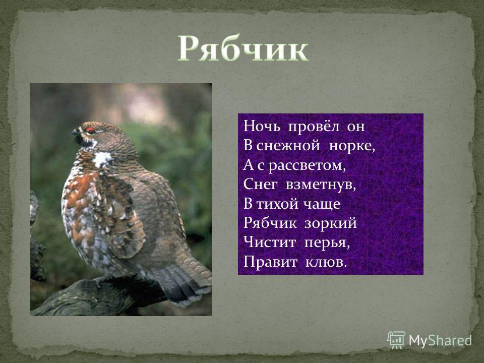 Ночь провёл он В снежной норке, А с рассветом, Снег взметнув, В тихой чаще Рябчик зоркий Чистит перья, Правит клюв.