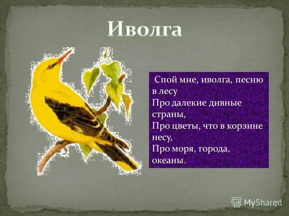 Спой мне, иволга, песню в лесу Про далекие дивные страны, Про цветы, что в корзине несу, Про моря, города, океаны.