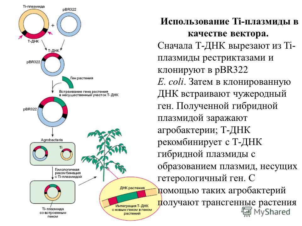 Использование Ti-плазмиды в качестве вектора. Сначала Т-ДНК вырезают из Ti- плазмиды рестриктазами и клонируют в pBR322 E. coli. Затем в клонированную ДНК встраивают чужеродный ген. Полученной гибридной плазмидой заражают агробактерии; Т-ДНК рекомбин
