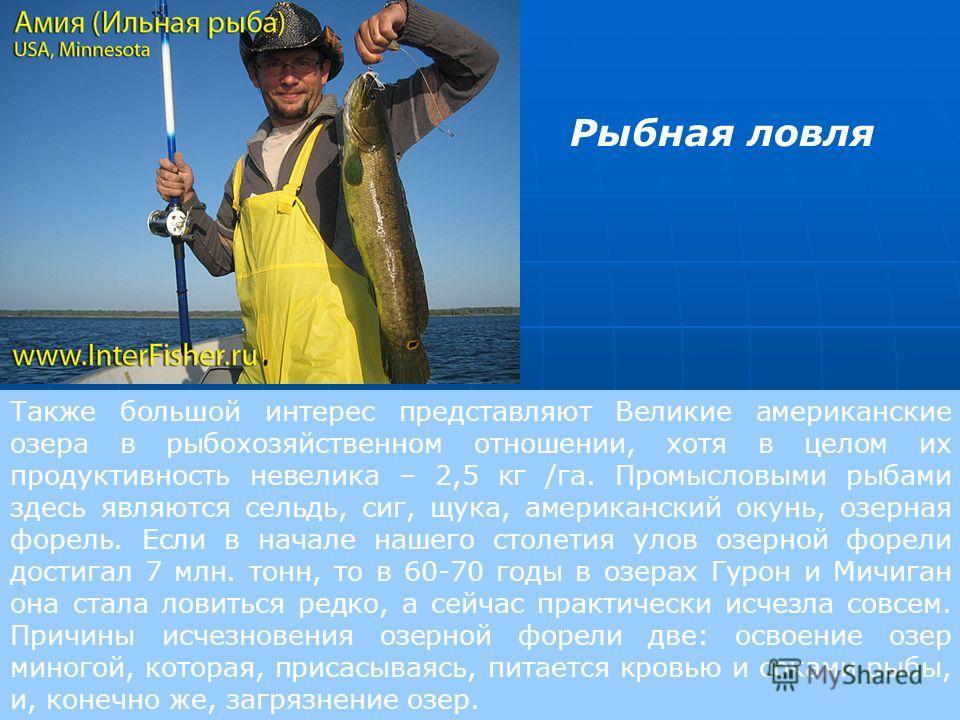 Также большой интерес представляют Великие американские озера в рыбохозяйственном отношении, хотя в целом их продуктивность невелика – 2,5 кг /га. Промысловыми рыбами здесь являются сельдь, сиг, щука, американский окунь, озерная форель. Если в начале