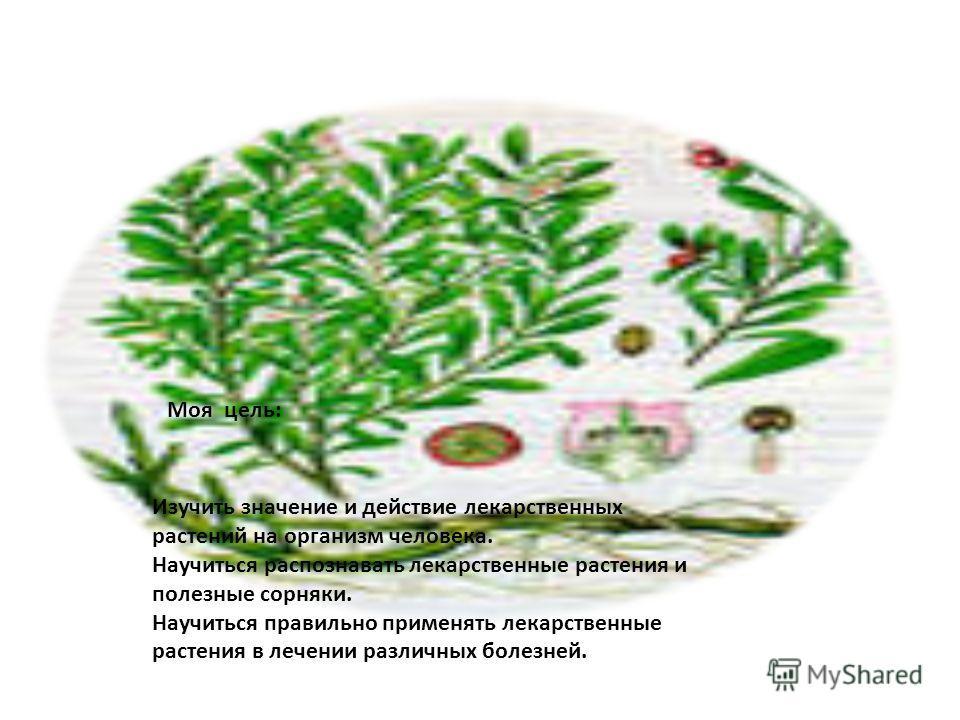 Изучить значение и действие лекарственных растений на организм человека. Научиться распознавать лекарственные растения и полезные сорняки. Научиться правильно применять лекарственные растения в лечении различных болезней. Моя цель: