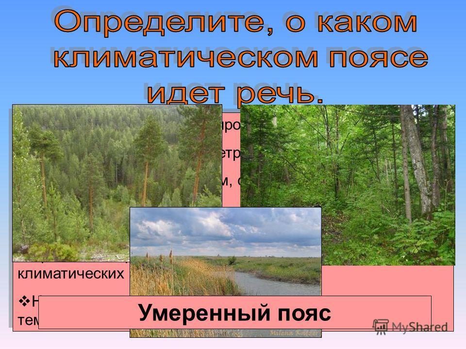 Пояс имеет наибольшую протяженность с севера на юг. Преобладают западные ветры. Пояс является постоянным, с холодной снежной зимой и теплым летом. Делится на пять секторов. Уральские горы являются климаторазделом двух климатических секторов. Находитс