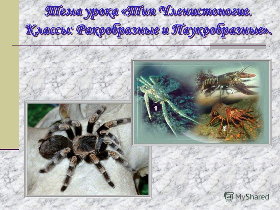 Тема урока «Тип Членистоногие. Классы: Ракообразные и Паукообразные».