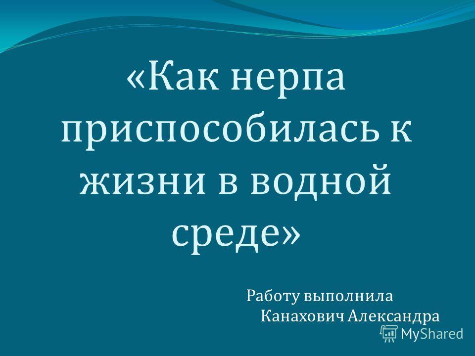 « Как нерпа приспособилась к жизни в водной среде » Работу выполнила Канахович Александра
