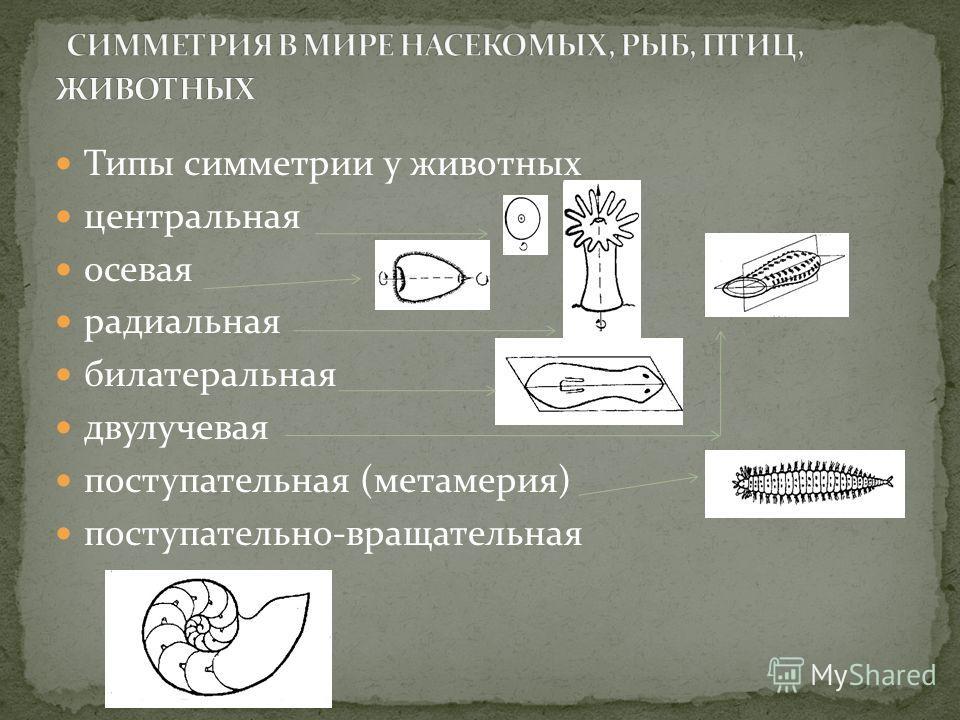 Типы симметрии у животных центральная осевая радиальная билатеральная двулучевая поступательная (метамерия) поступательно-вращательная