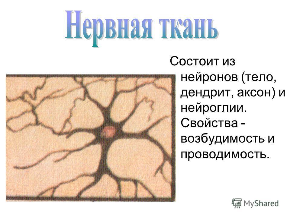 Состоит из нейронов (тело, дендрит, аксон) и нейроглии. Свойства - возбудимость и проводимость.