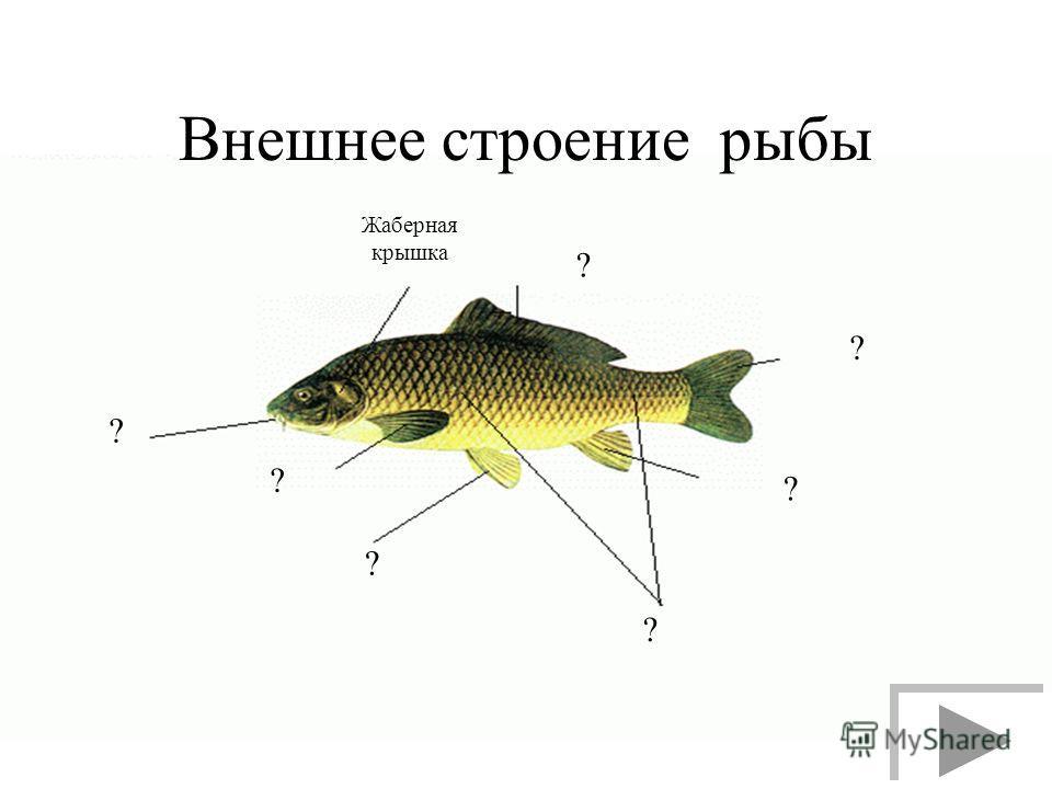 Внешнее строение рыбы ? ? ? ? ? ? ? Жаберная крышка
