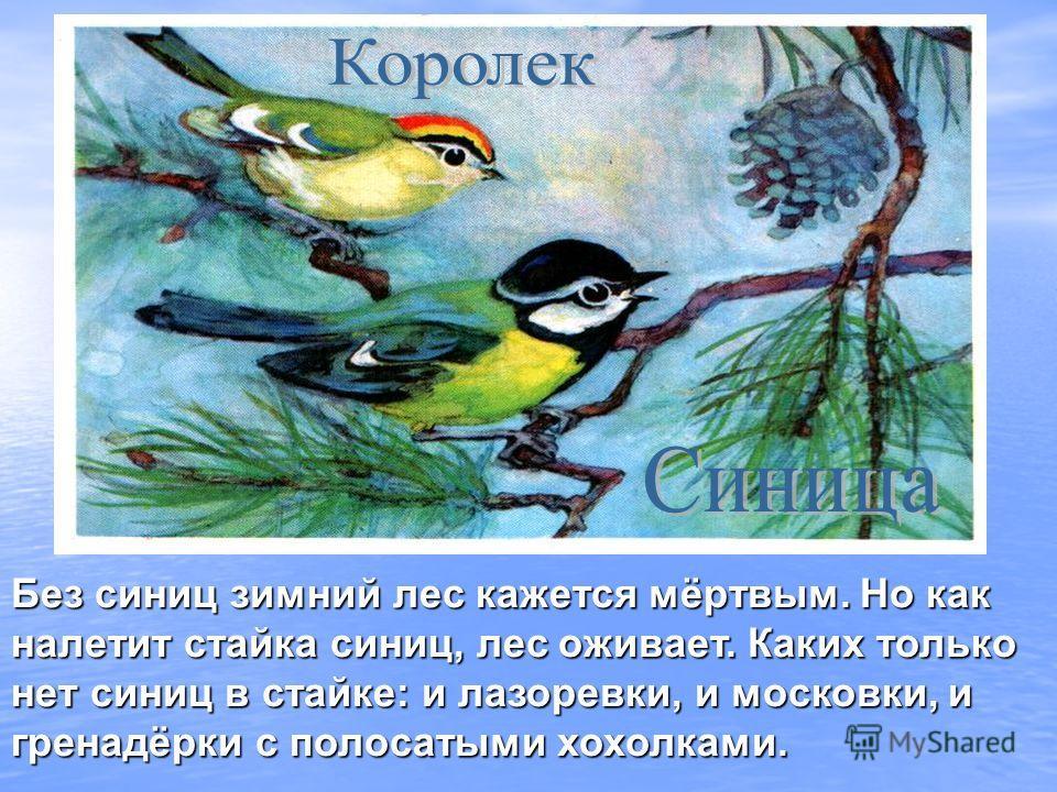 Без синиц зимний лес кажется мёртвым. Но как налетит стайка синиц, лес оживает. Каких только нет синиц в стайке: и лазоревки, и московки, и гренадёрки с полосатыми хохолками.