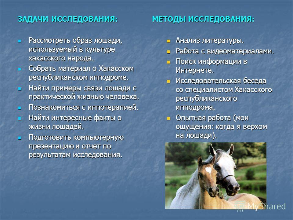 ЗАДАЧИ ИССЛЕДОВАНИЯ: Рассмотреть образ лошади, используемый в культуре хакасского народа. Рассмотреть образ лошади, используемый в культуре хакасского народа. Собрать материал о Хакасском республиканском ипподроме. Собрать материал о Хакасском респуб
