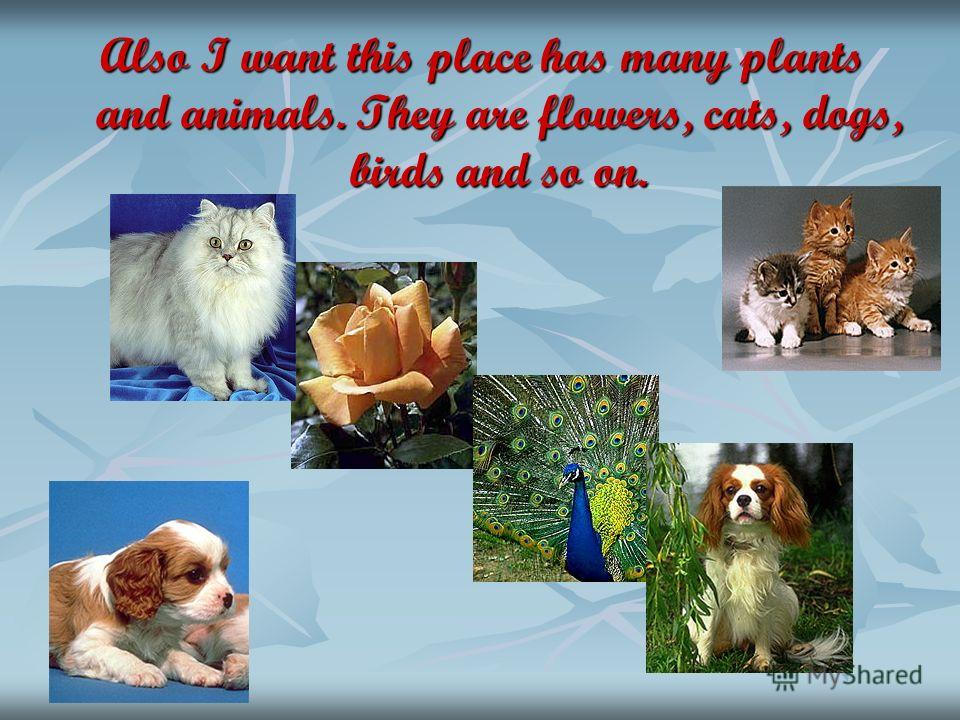 Also I want this place has many plants and animals. They are flowers, cats, dogs, birds and so on.