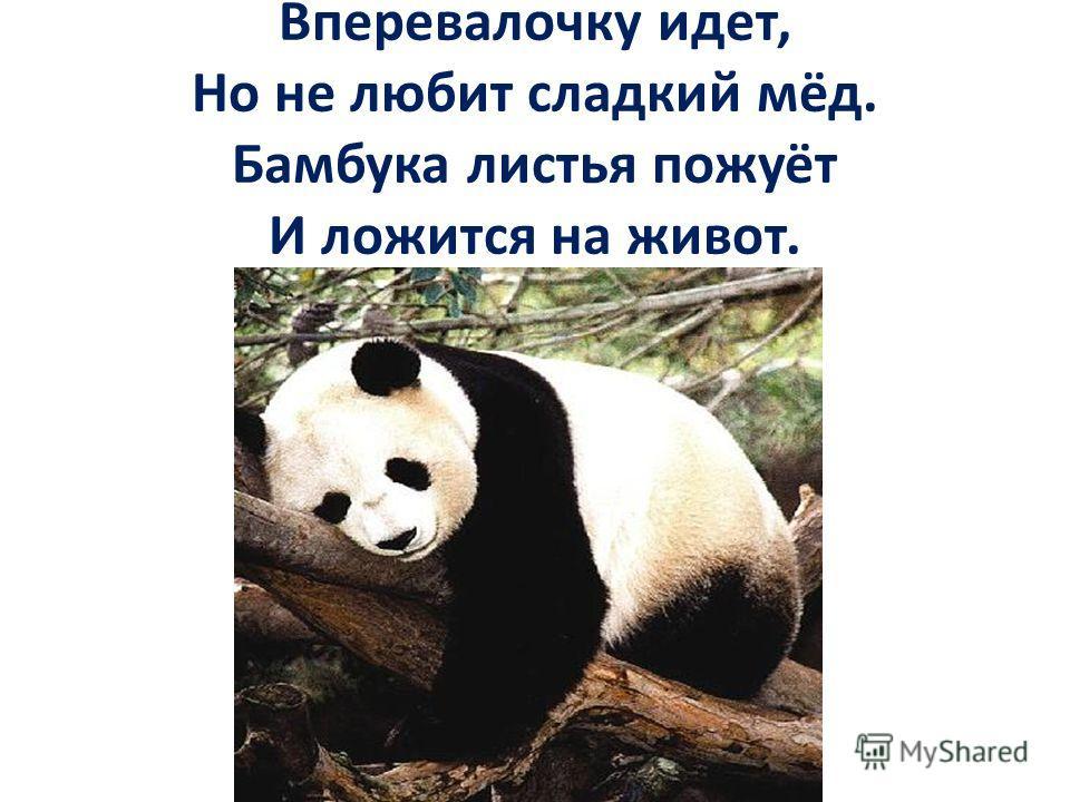 Вперевалочку идет, Но не любит сладкий мёд. Бамбука листья пожуёт И ложится на живот.