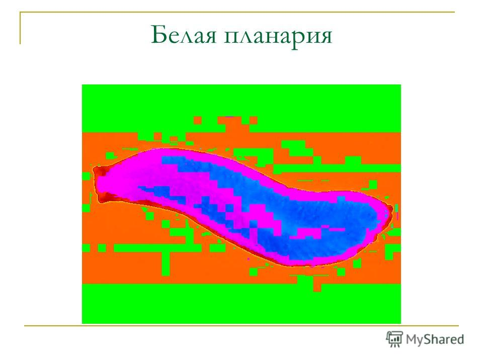 Презентация Способы Передвижения Животных Полости Тела 7 Кл